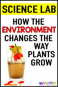 Do this easy science lab with your students to see how something as small as changing the color of the water changes how things grow and how a dirty environment can change the way plants grow.
